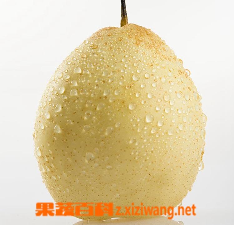 果蔬百科梨